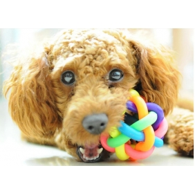 Wholesale Pet Toy Colorful Rubber Round Ball with Small Bell Toy For Dogs Cats - Size M