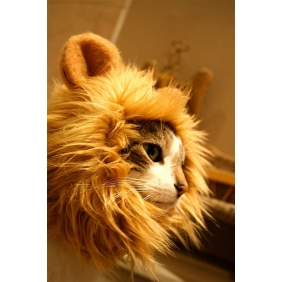 Wholesale Novelty Lion's Mane Cat Hat like lion mane hat Stuffed & Plush cat's Toy for Cats Dogs