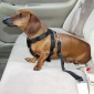 Wholesale Car Vehicle Auto Seat Car dog Safety Belt Adjustable Seatbelt travel safe belts for Dog Cat Pet