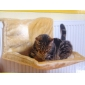 images/v/Wholesale-Sky-Climber-Hanging-Warm-Foldable-Cushion-Cat-Bed.jpg